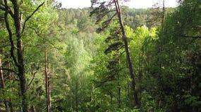在森林 库存照片