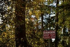 在森林 免版税库存照片