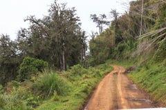 在森林Aberdare风景的黄色路 肯尼亚 免版税库存照片