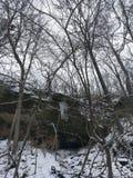 在森林ay威廉斯波特秋天的冰柱 库存照片