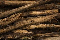 在森林bacground的日志谎言 图库摄影