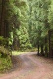 在森林Terceira里铺石渣在树之间的路 亚速尔群岛 Portuga 免版税库存照片