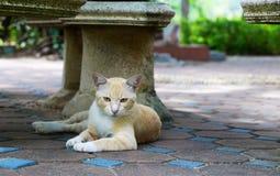 在椅子下的海氏猫在公园 免版税库存图片