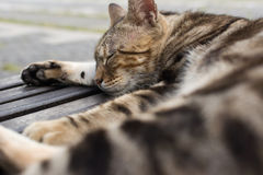 在椅子的猫睡眠 免版税库存图片