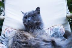 在椅子的猫 免版税库存图片