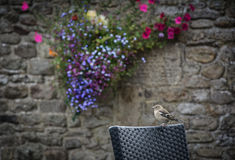 在椅子的鸟 免版税图库摄影