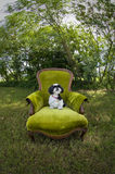 在椅子的Shih慈济狗 库存照片