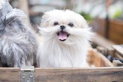 在椅子看的一条狗 免版税库存图片