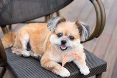 在椅子看的一条狗 库存图片