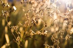 在植物上的蜘蛛网 免版税图库摄影