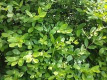 在植物上的蠕虫 库存图片