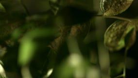 在植物之间绿色叶子  在森林木头风景的黑暗的草丛 股票视频