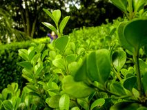 在植物之间 库存图片