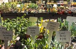 在植物出售的仙人掌 库存照片