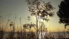 在植物后剪影的美好的日落  股票录像