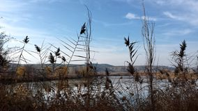 在植物后的湖 库存照片