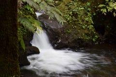 在植物园夏威夷的瀑布 库存图片