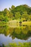 在植物园的反射 免版税库存照片