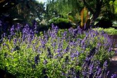 在植物园的蓝色小花 库存照片