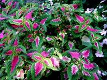 在植物园里种植的花红色绿色叶子  库存照片