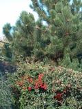 在植物园- Macea,阿拉德县,罗马尼亚的普通植被 免版税库存图片