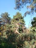 在植物园- Macea,阿拉德县,罗马尼亚的普通植被 图库摄影