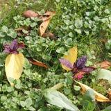 在植物园- Macea,阿拉德县,罗马尼亚的秋叶 免版税库存照片