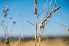 在植物困住的小蜗牛 免版税库存图片
