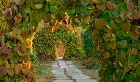 在植物曲拱的道路  图库摄影