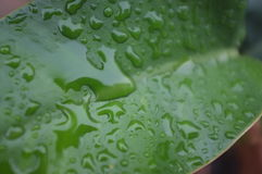 在植物的下落水 免版税图库摄影