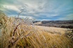 在植物的冰在非常冷的早晨 免版税图库摄影