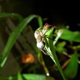 在植物的叶子的蜘蛛 库存照片