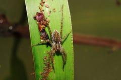 在植物的叶子的蜘蛛 图库摄影