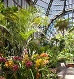 在植物的大厦的花。圣地亚哥 免版税库存图片