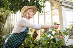 在植物的妇女喷洒的水 免版税库存照片