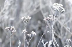在植物的树冰冬天领域的 免版税库存图片