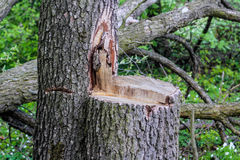 在植物的森林保护的一棵击倒的树 免版税库存图片