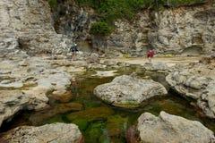 在植物的海滩的潮汐水池 库存图片