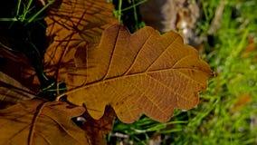 在植物的秋天颜色 免版税库存图片