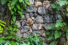 在植物的葡萄酒石墙 库存照片