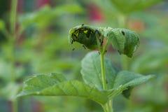 在植物的蚂蚁 免版税库存图片