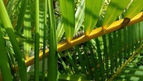 在植物的蝴蝶幼虫 股票视频