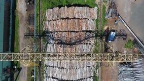 在植物的被锯的木头 股票录像