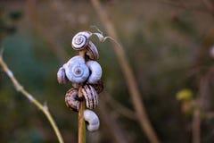 在植物的词根的蜗牛 免版税库存图片