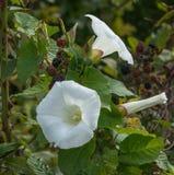 在植物的野生植物花 库存图片