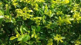 在植物的阳光 免版税库存照片