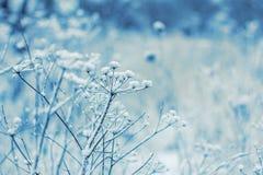 在植物的雪 免版税库存照片