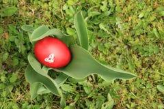 在植物的鸡蛋 免版税库存图片