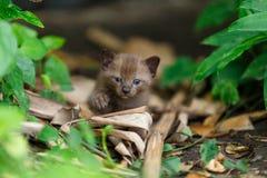 在植物的黑小猫 免版税库存图片