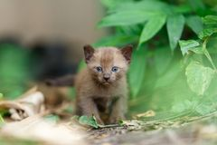 在植物的黑小猫 库存图片